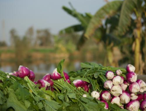L'UE soutient les efforts de l'Égypte pour moderniser l'irrigation